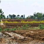 Persiapan Lahan - Konstruksi Baja Breeding Farm 2 Lantai