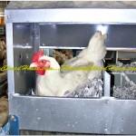 Produksi Broiler Breedier - Konstruksi Baja Breeding Farm 2 Lantai